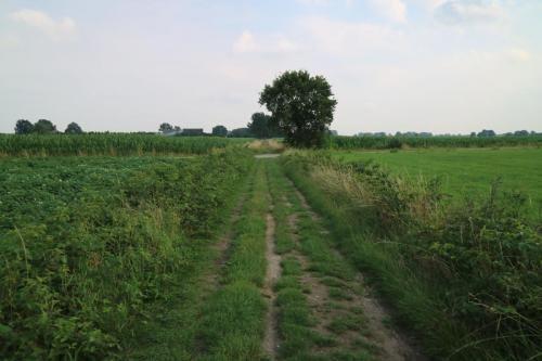 Tussen de akkers via de Streek-GR Kempen van Sint-Lenaarts naar Malle