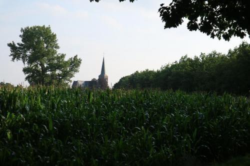 Zicht op de Sint-Martinuskerk in Westmalle