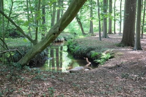 Beekje in natuurgebied 's Herenbos