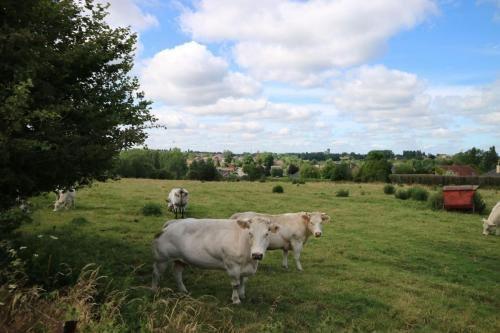 Koeien in de wei in Anderlues